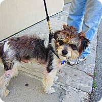 Adopt A Pet :: Bandit - Culver City, CA