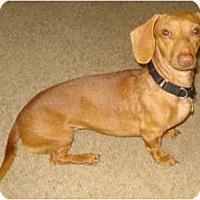 Adopt A Pet :: Ruby Anne - San Jose, CA