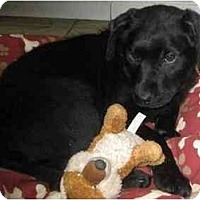 Adopt A Pet :: Vienna - Antioch, IL