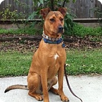 Adopt A Pet :: Sheffield - Houston, TX