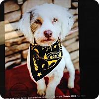 Adopt A Pet :: Benji - Scottsdale, AZ