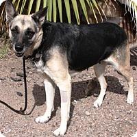 Adopt A Pet :: Loba - Gilbert, AZ