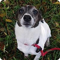 Adopt A Pet :: Febee - Lake Odessa, MI