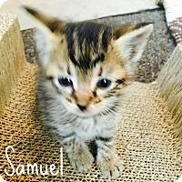 Adopt A Pet :: Samuel - Bentonville, AR