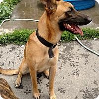 Adopt A Pet :: Kira - Montour Falls, NY