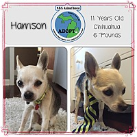 Adopt A Pet :: Harrison - Troy, MI