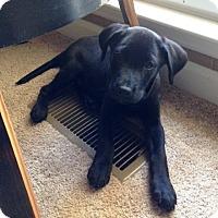 Adopt A Pet :: AMMO - Huntsville, AL