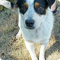 Adopt A Pet :: Dallas - Lebanon, CT