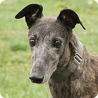 Adopt A Pet :: Ashlee - Portland, OR
