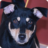 Adopt A Pet :: Garnett - Rexford, NY
