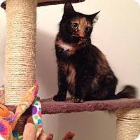 Adopt A Pet :: Penelope - Woodstock, ON