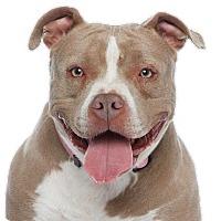 Adopt A Pet :: Tubs (female) - Los Angeles, CA