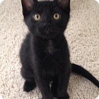 Adopt A Pet :: Lu Lu - St. Cloud, FL