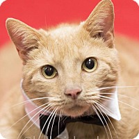 Adopt A Pet :: Jasper - (Mr. Social Butterfly) - Oviedo, FL