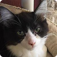 Adopt A Pet :: Eevee - Menifee, CA