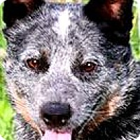 Adopt A Pet :: JACK* WOW!! SO SMART!! - Wakefield, RI