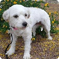 Adopt A Pet :: Iris formerly Snow - Las Vegas, NV