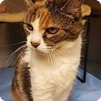 Adopt A Pet :: PRINCESS - Tiffin, OH