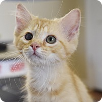 Adopt A Pet :: Timmy - Homewood, AL