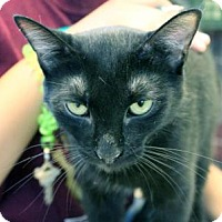 Adopt A Pet :: Violet - Indianapolis, IN