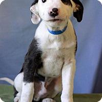 Adopt A Pet :: Francis - Waldorf, MD