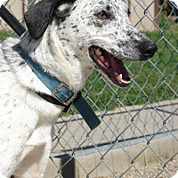 Adopt A Pet :: Lucky - Angola, IN