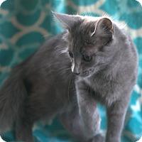 Adopt A Pet :: Allen - Spring Valley, NY