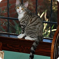 Adopt A Pet :: Rocky - Los Angeles, CA