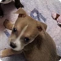 Adopt A Pet :: Zack - Atlanta, GA