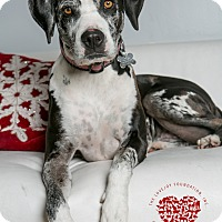 Adopt A Pet :: Tallulah Mae - Inglewood, CA