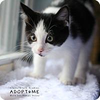 Adopt A Pet :: Tater - Edwardsville, IL