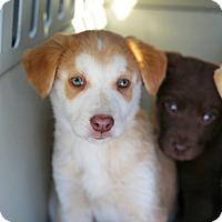 Adopt A Pet :: Logan - Sawyer, ND