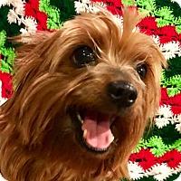 Adopt A Pet :: Mistletoe - Cleveland, OH
