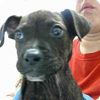 Adopt A Pet :: RAMBO - Conroe, TX