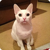 Adopt A Pet :: Scampi - Mount Laurel, NJ