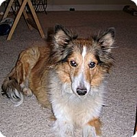 Adopt A Pet :: Hope - apache junction, AZ