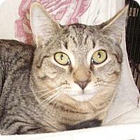 Adopt A Pet :: Beamer - Germansville, PA