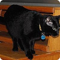 Adopt A Pet :: Dr. Pepper - Grand Rapids, MI