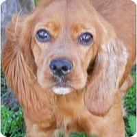 Adopt A Pet :: Reba - Sugarland, TX