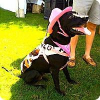 Adopt A Pet :: Xena - Miami, FL