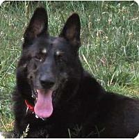 Adopt A Pet :: Ringo - Conyers, GA