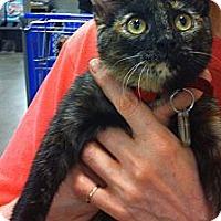 Adopt A Pet :: Maya - Pittstown, NJ