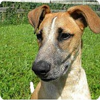 Adopt A Pet :: Juliette - Rigaud, QC