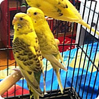 Adopt A Pet :: Skyler - Shawnee Mission, KS
