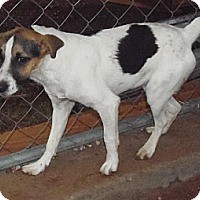 Adopt A Pet :: Flaco - Post, TX