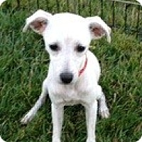 Adopt A Pet :: Nika - Calgary, AB