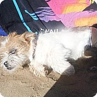 Adopt A Pet :: SPUNKY - Atascadero, CA