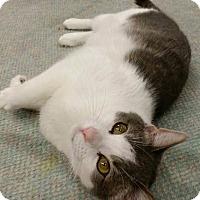 Adopt A Pet :: Precious - Bonita Springs, FL