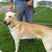Adopt A Pet :: HoneyBear - Lancaster, OH