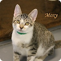Adopt A Pet :: Moxy - Winter Haven, FL